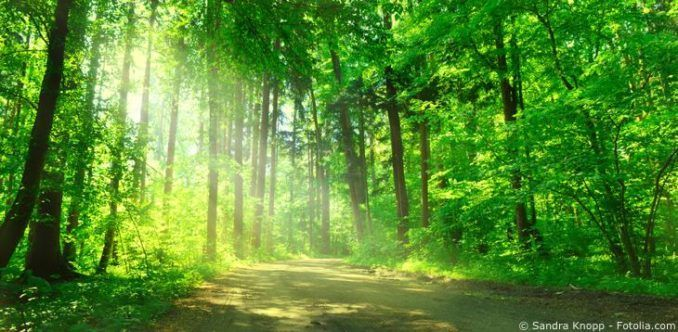 Wald Umweltschutz